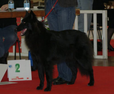 Les expositions canines